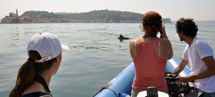 A dolphin off the coast of Piran, Slovenia.